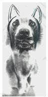 Ray Cat