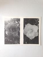 Jason Roberts Dobrin:Roses