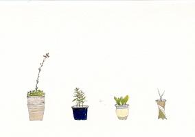 Hoyong Son:Plants