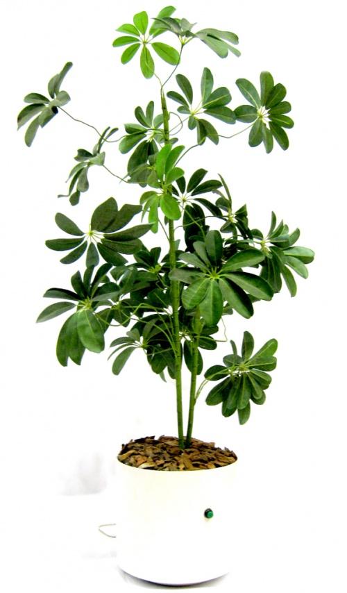Real Fake Plant