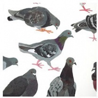 Annie Dunning: The Pigeon Homing Project Poster