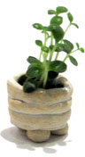 Miniature Garden - Doyle, Maura