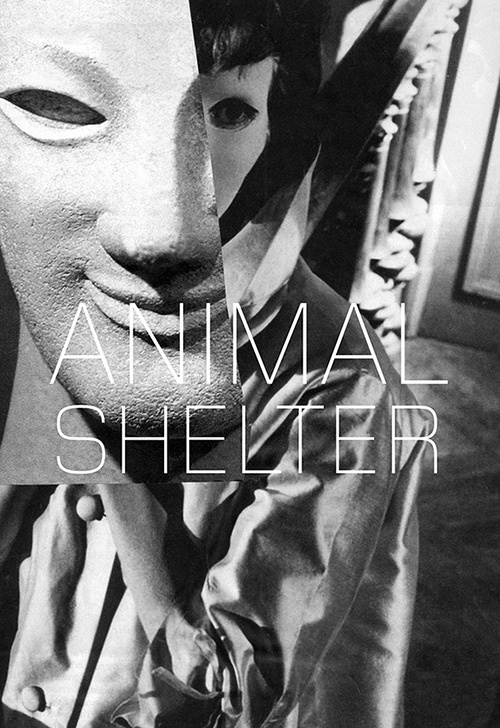 Animal Shelter, Issue 3